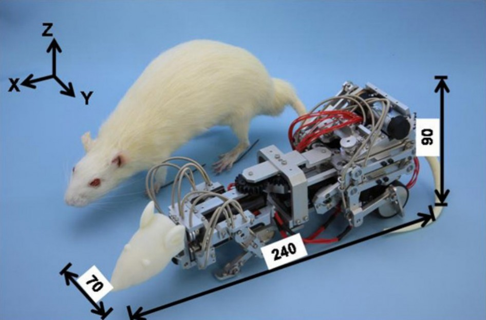 "{""author"":""Takanishi%20Lab%20@%20Waseda%20University"",""link"":""http%3A//www.popsci.com/science/article/2013-02/how-do-you-depress-rat-terrorize-it-robot"",""descr"":""робот-крыса""}"
