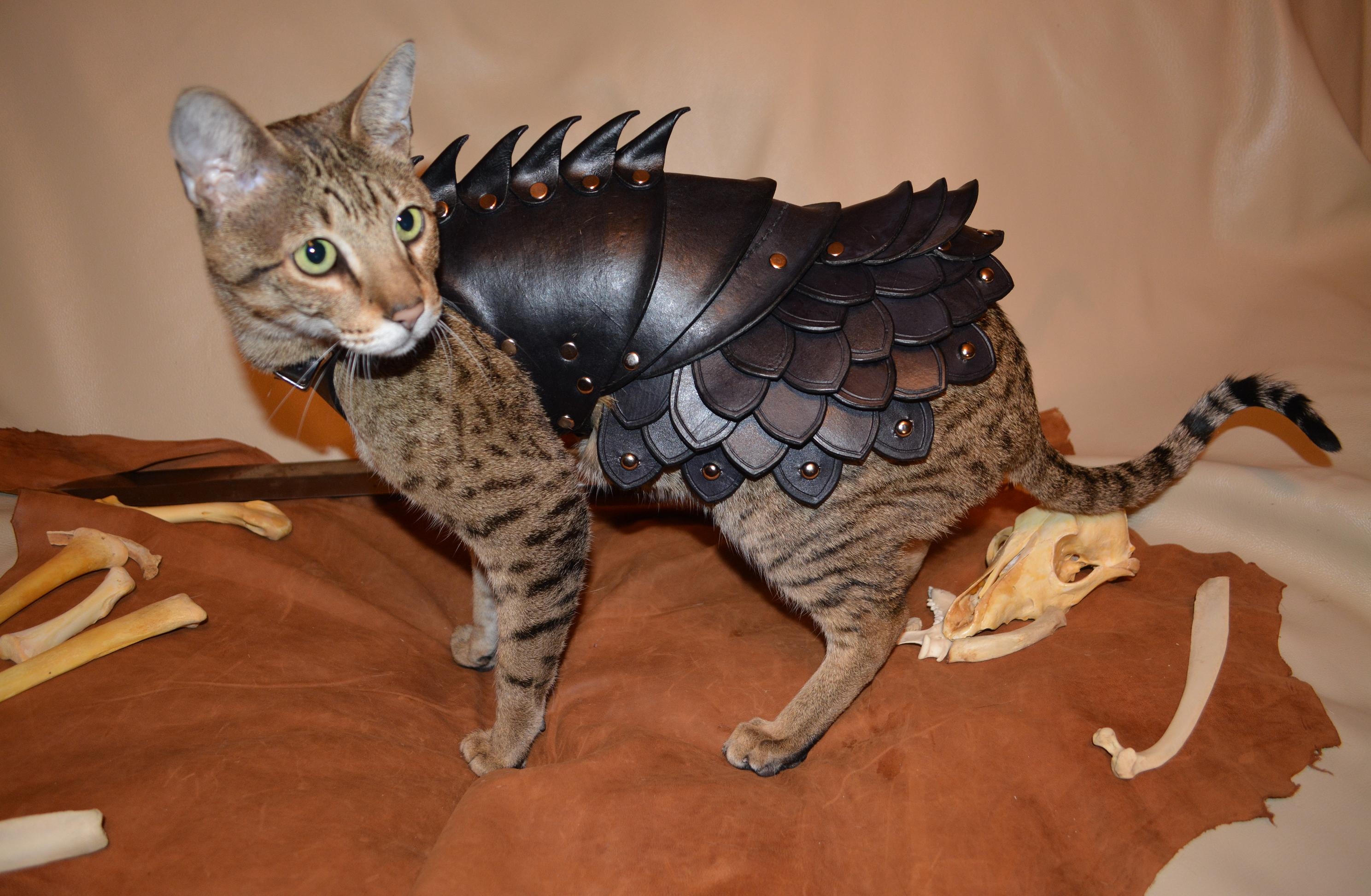 "{""author"":""SavagePunkStudio"",""link"":""http%3A//savagepunkstudio.deviantart.com/art/Cat-Battle-Armor-2-425705901"",""descr"":""доспехи%20кота""}"