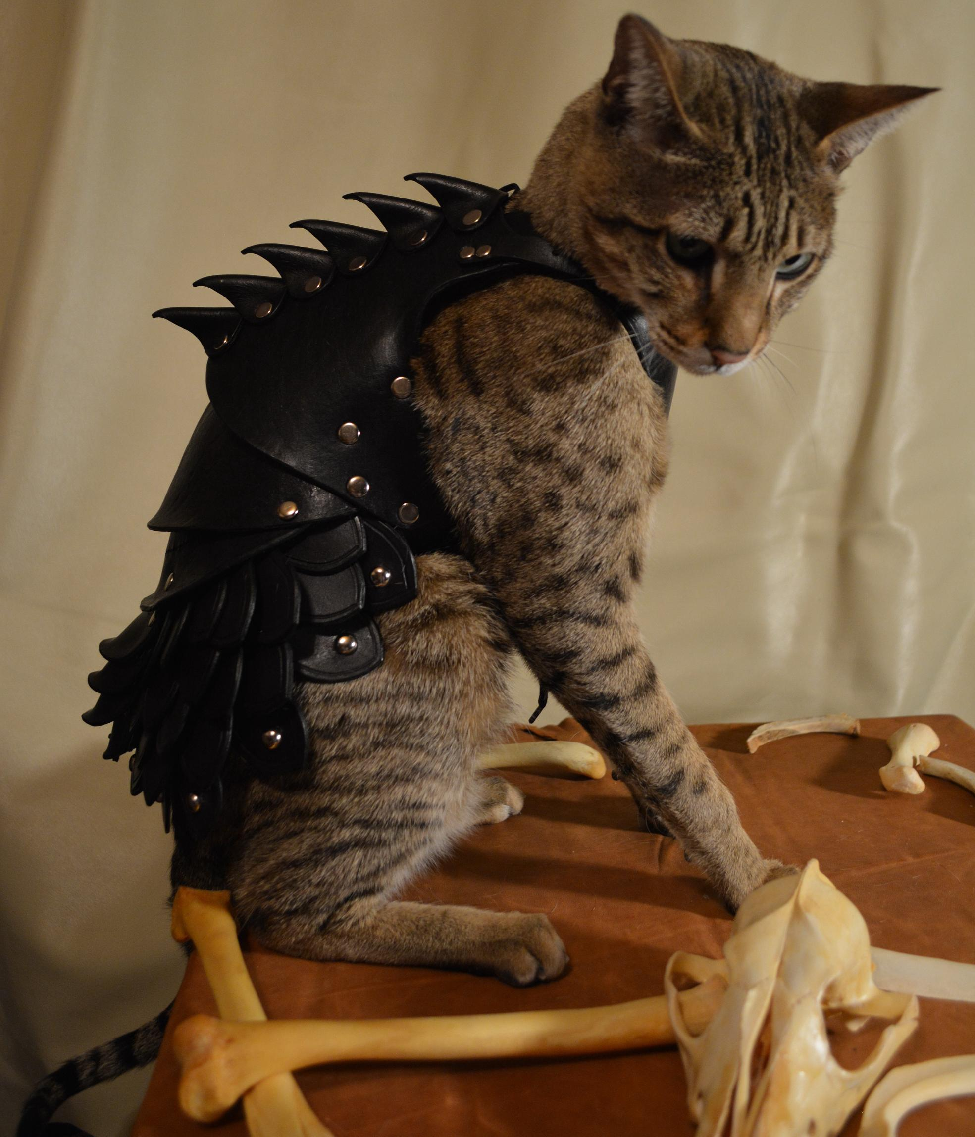 "{""author"":"""",""link"":""http%3A//savagepunkstudio.deviantart.com/art/Cat-Battle-Armor-3-425706059"",""descr"":""доспехи%20кота""}"